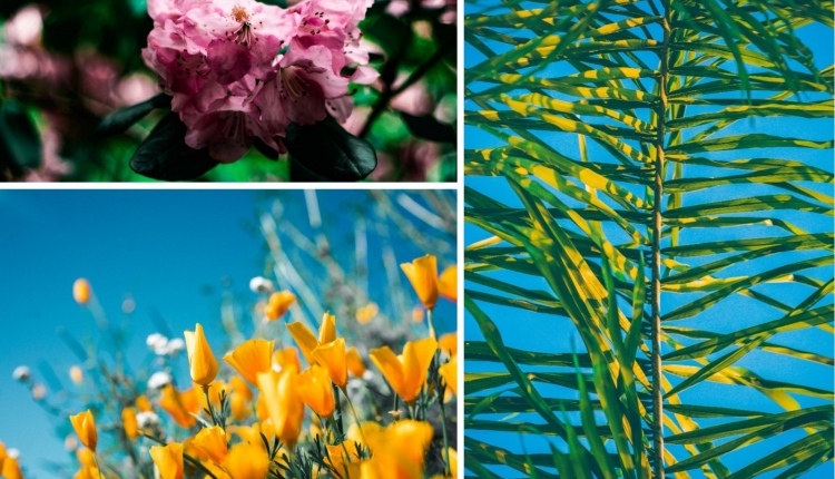 Keep your garden colorful all year round collage