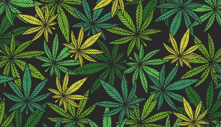 How To Start Growing Marijuana By Yourself